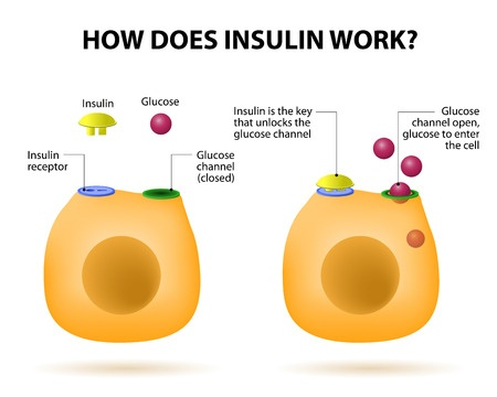 Insulin is a hormone made by the pancreas to help keep blood glucose stable.