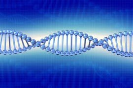 DNA 'End-Caps' Length Linked to Diabetes Risk
